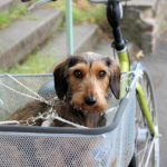 Fahrradurlaub mit dem Hund