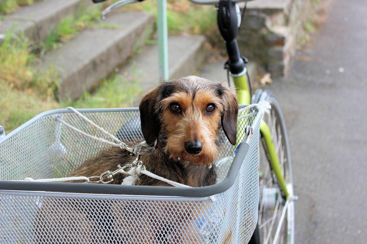 Read more about the article Fahrradurlaub mit dem Hund